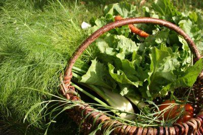 Feldafinger Kitas - Gutes und regionales Essen in Kita und Schule